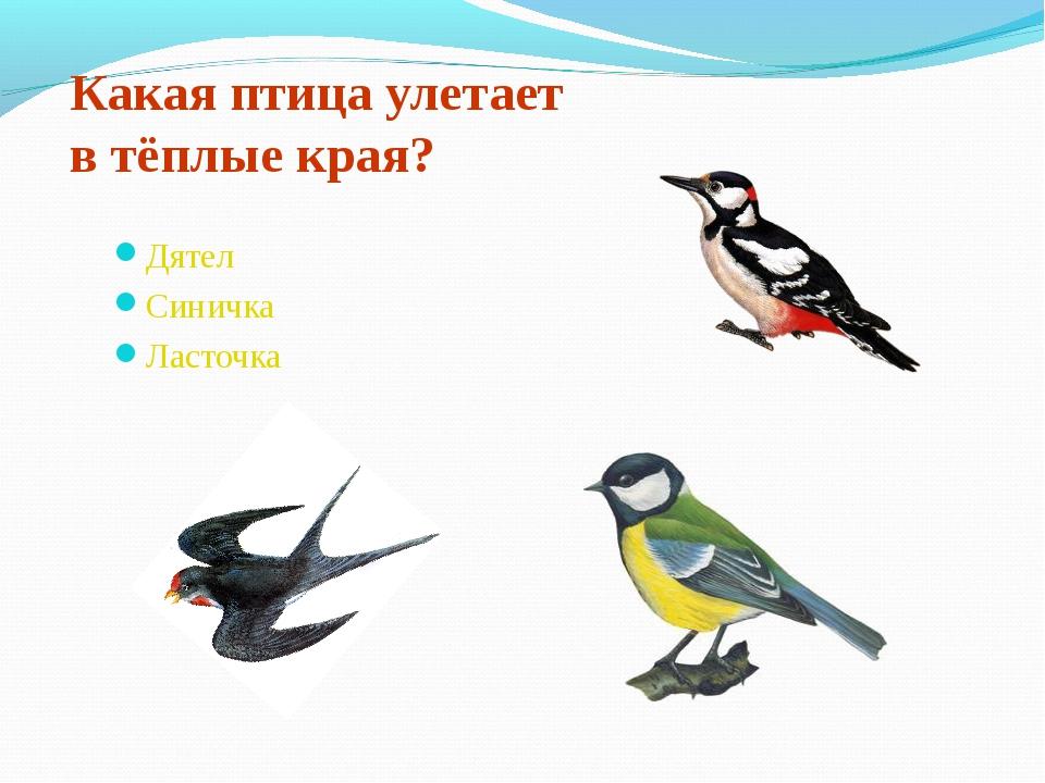 Какая птица улетает в тёплые края? Дятел Синичка Ласточка