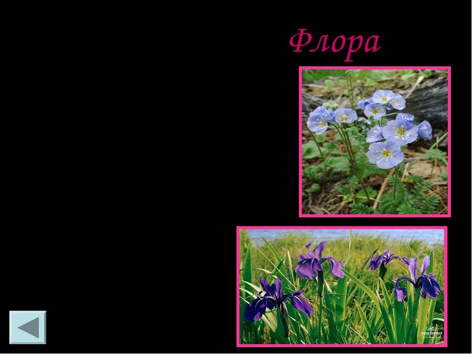 Флора Байкал поражает красотой, богатством фауны, своей уникальностью и непов...