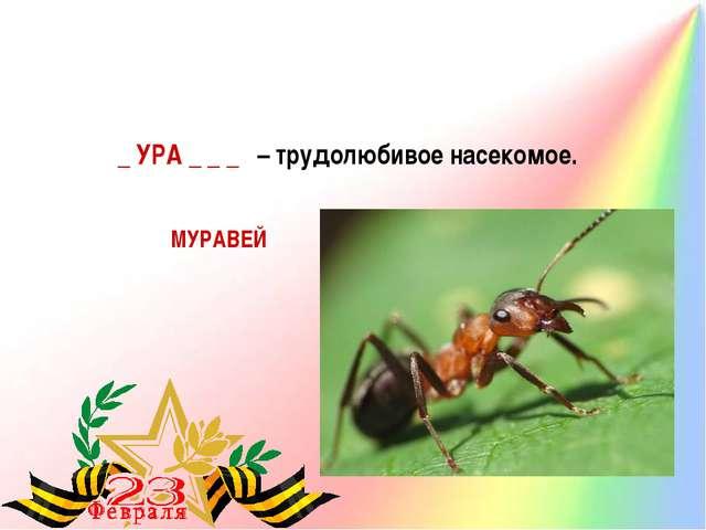 _ УРА _ _ _ – трудолюбивое насекомое. МУРАВЕЙ