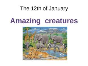 The 12th of January Amazing creatures