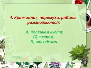 4. Крыжовник, черемуха, рябина размножаются: А) делением куста; Б) листом; В)