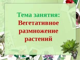Тема занятия: Вегетативное размножение растений
