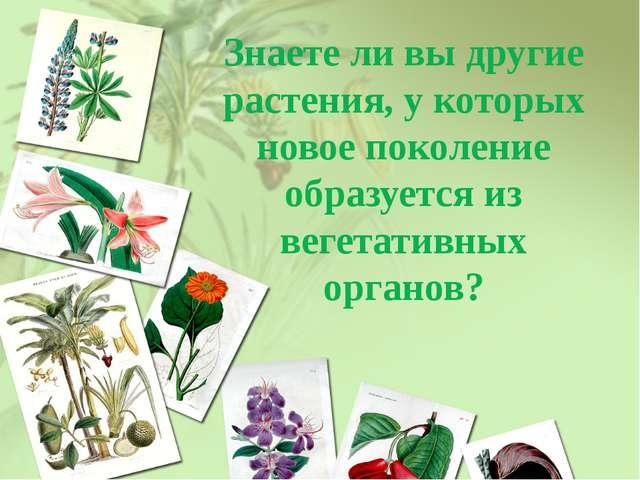 Знаете ли вы другие растения, у которых новое поколение образуется из вегетат...