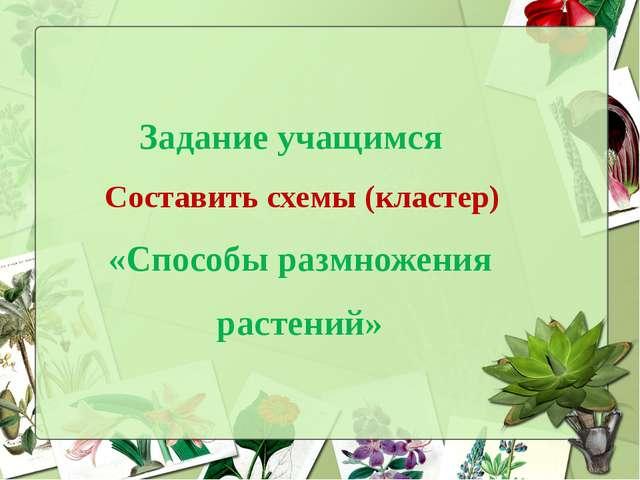 Задание учащимся Составить схемы (кластер) «Способы размножения растений»