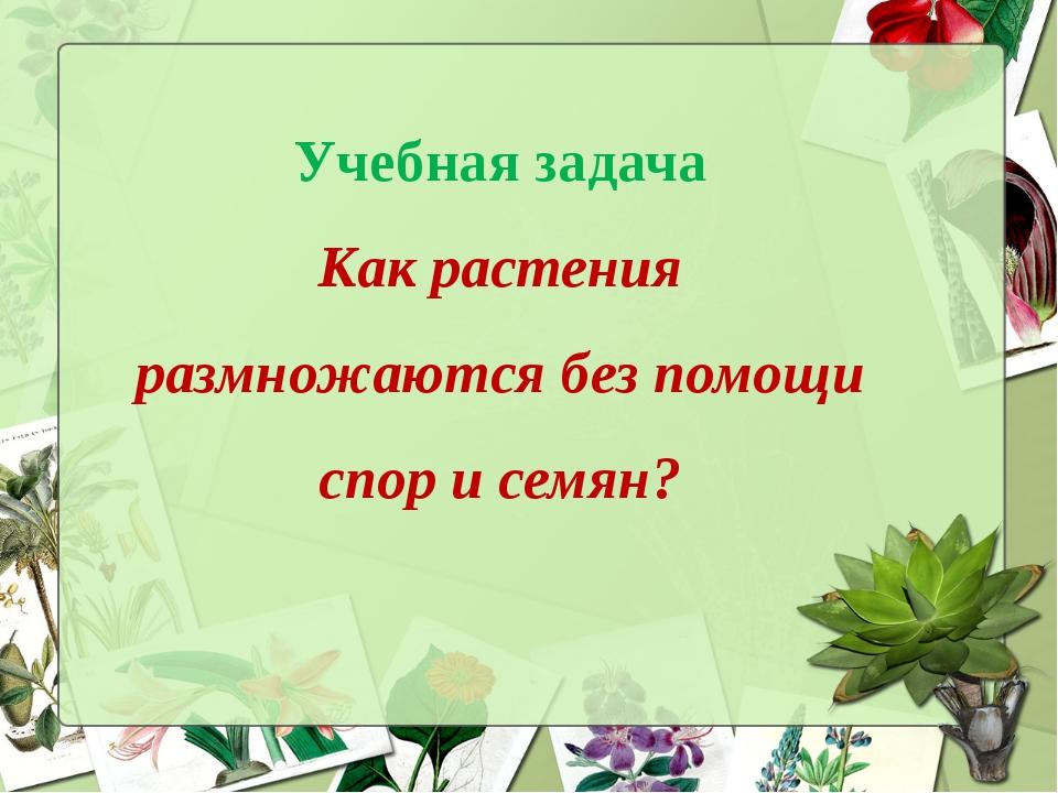 Учебная задача Как растения размножаются без помощи спор и семян?