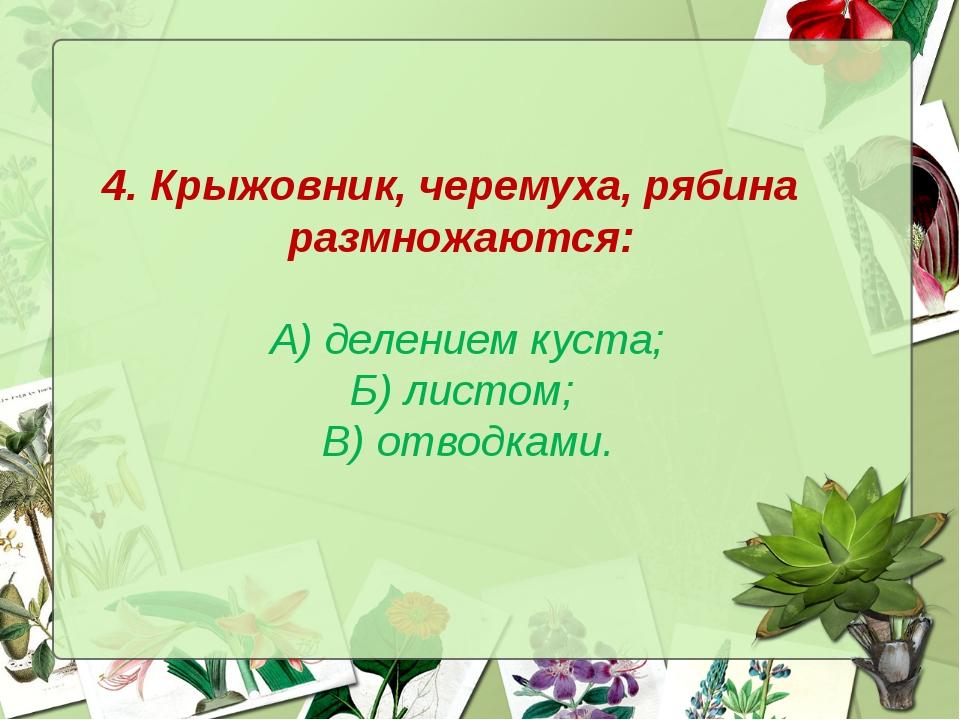 4. Крыжовник, черемуха, рябина размножаются: А) делением куста; Б) листом; В)...