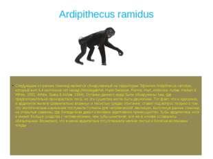 Ardipithecus ramidus Следующим из ранних гоминид является обнаруженный на тер