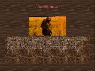 Пикаптроп Следующий представитель на лестнице эволюционного развития человека