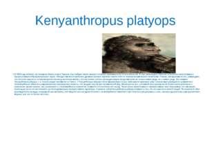 Kenyanthropus platyops В 1999 году в Кении, на западном берегу озера Торкана,