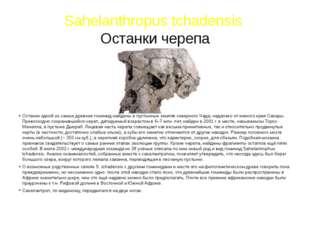 Sahelanthropus tchadensis Останки черепа Останки одной из самых древних гомин