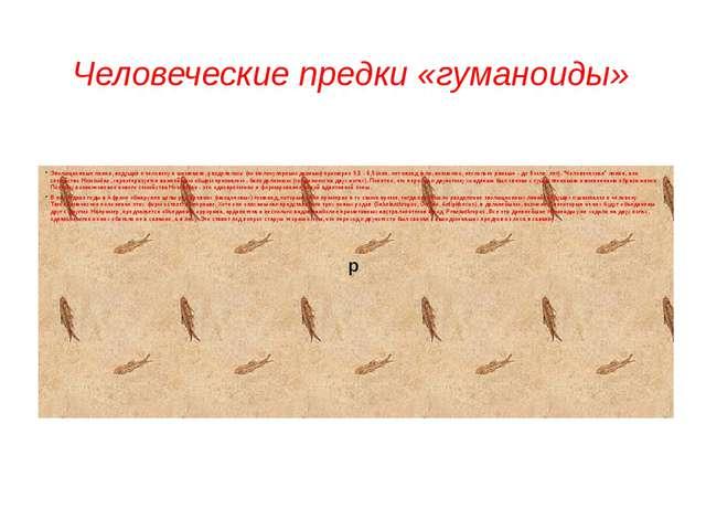 Человеческие предки «гуманоиды» Эволюционные линии, ведущие к человеку и шимп...