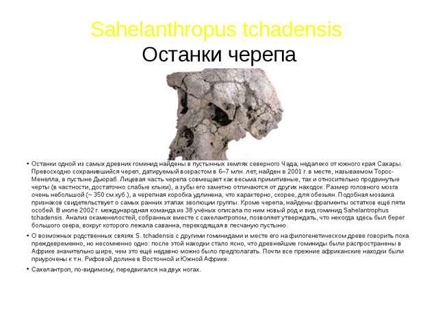 Sahelanthropus tchadensis Останки черепа Останки одной из самых древних гомин...
