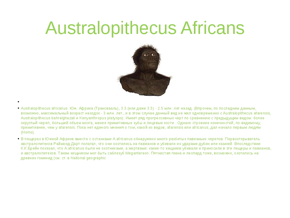 Australopithecus Africans  Australopithecus africanus Юж. Африка (Трансвааль...