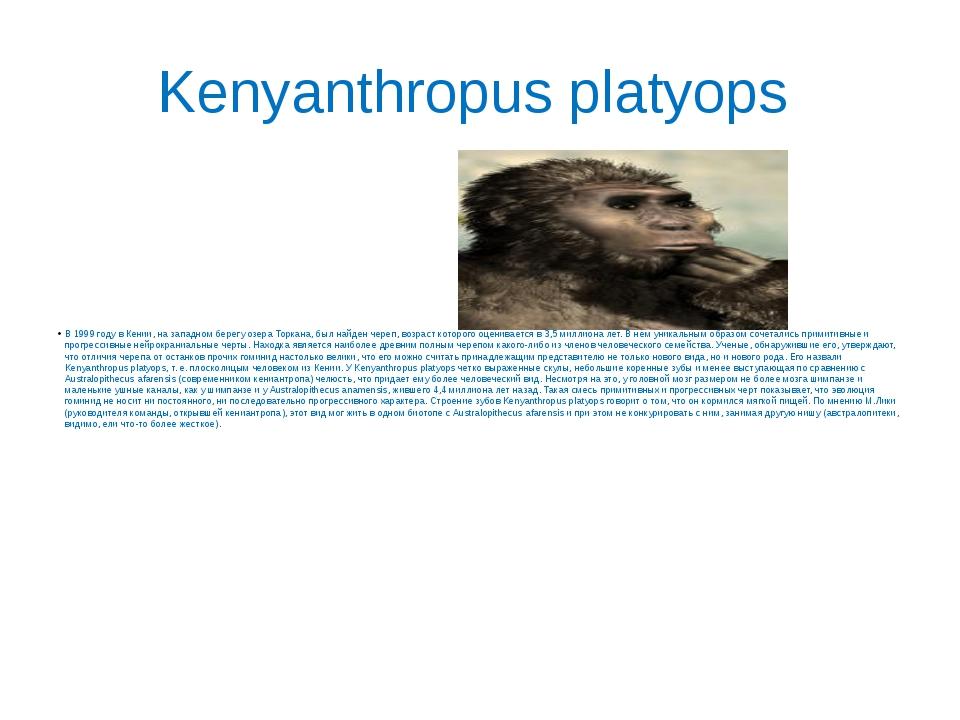 Kenyanthropus platyops В 1999 году в Кении, на западном берегу озера Торкана,...
