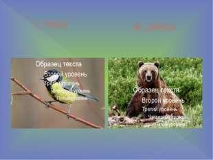 с_ница м_дведь