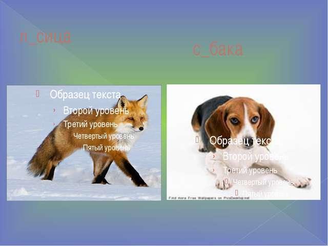 с_бака л_сица