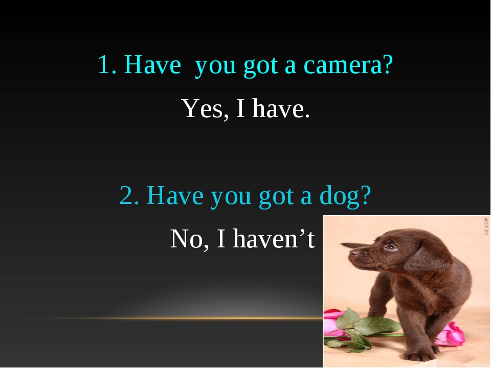 1. Have you got a camera? Yes, I have. 2. Have you got a dog? No, I haven't