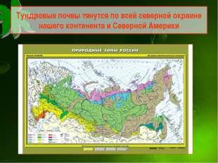 Тундровые почвы тянутся по всей северной окраине нашего континента и Северной