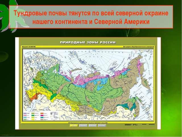 Тундровые почвы тянутся по всей северной окраине нашего континента и Северной...