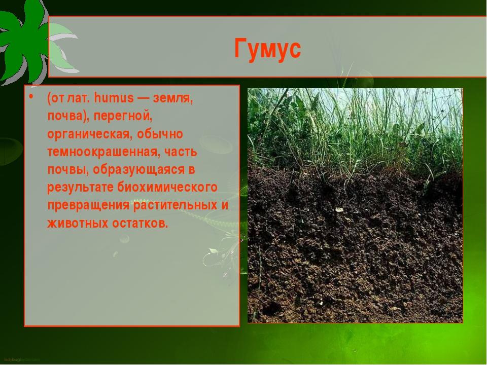 Гумус (от лат. humus — земля, почва), перегной, органическая, обычно темноокр...