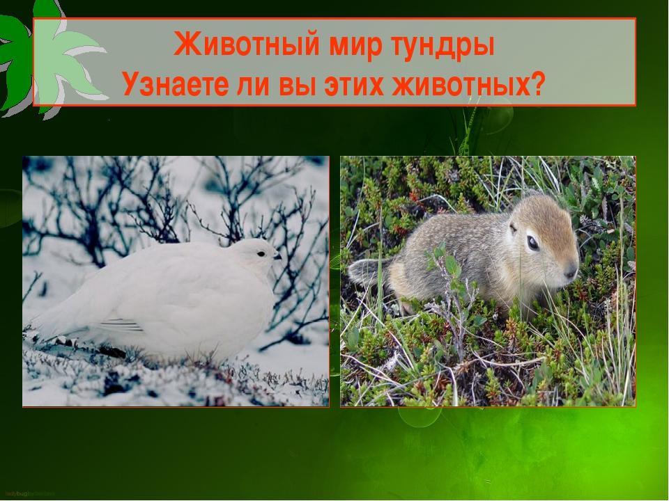 Животный мир тундры Узнаете ли вы этих животных?