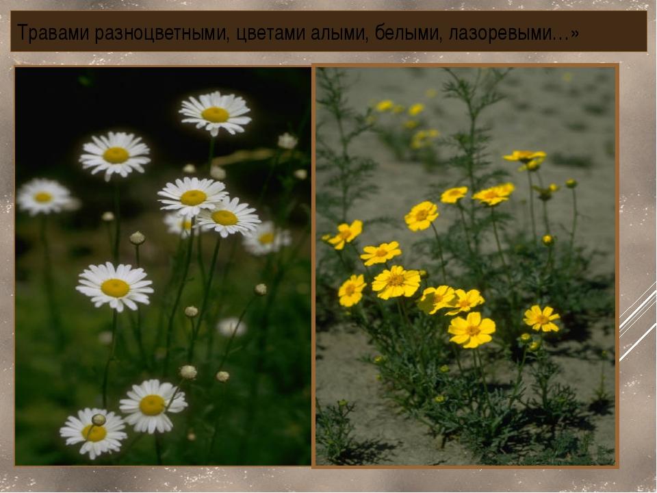 Травами разноцветными, цветами алыми, белыми, лазоревыми…»