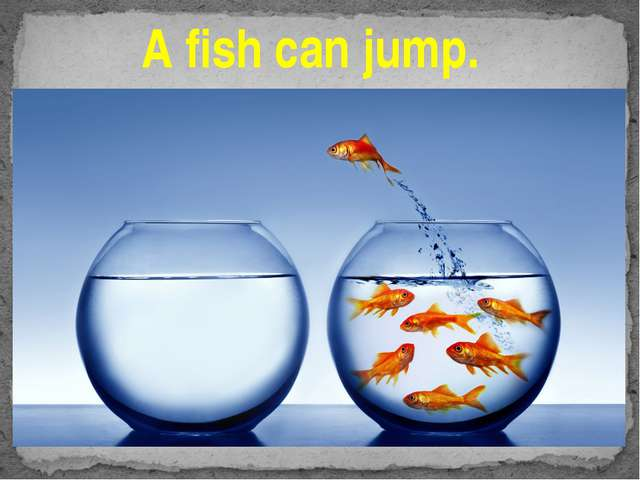 A fish can jump.