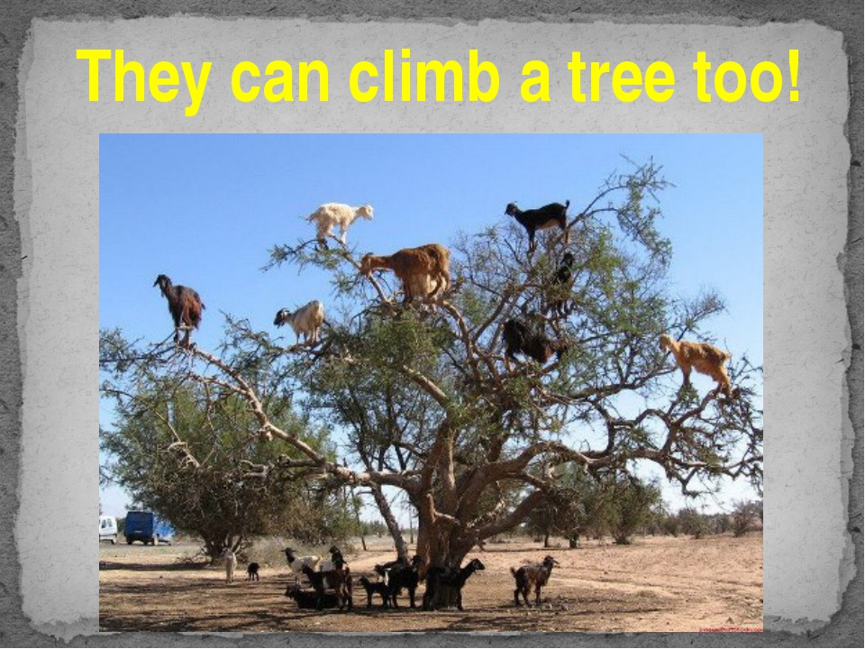 They can climb a tree too!