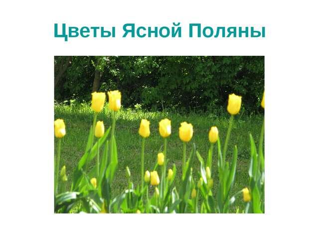Цветы Ясной Поляны