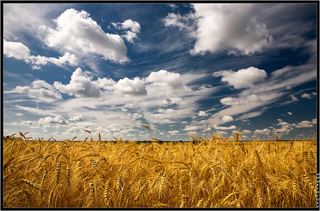 35PHOTO - Алексей Строганов - Хлеба России