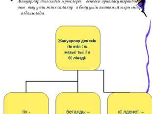 ІІІ. Жаңа тақырыпты түсіндіру: Жануарлар денесіндегі мүшелердің денедегі орна