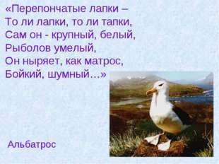 «Перепончатые лапки – То ли лапки, то ли тапки, Сам он - крупный, белый, Рыб