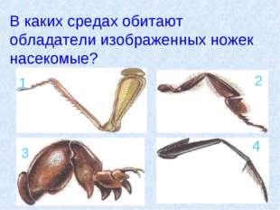 В каких средах обитают обладатели изображенных ножек насекомые? 1 2 3 4