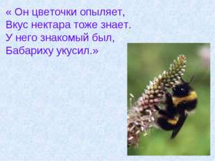« Он цветочки опыляет, Вкус нектара тоже знает. У него знакомый был, Бабариху