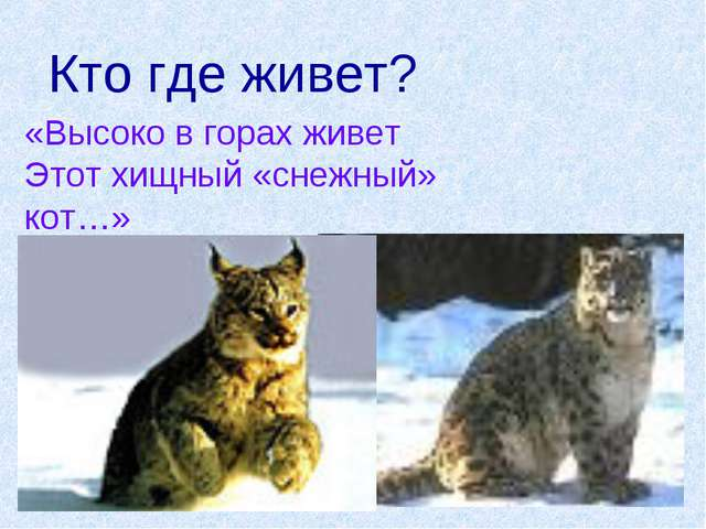 Кто где живет? «Высоко в горах живет Этот хищный «снежный» кот…»