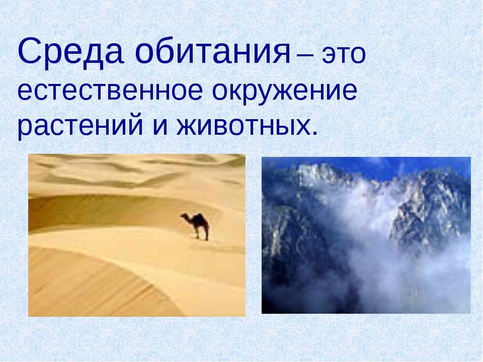 Среда обитания – это естественное окружение растений и животных.