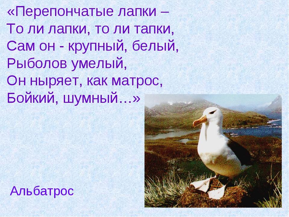 «Перепончатые лапки – То ли лапки, то ли тапки, Сам он - крупный, белый, Рыб...