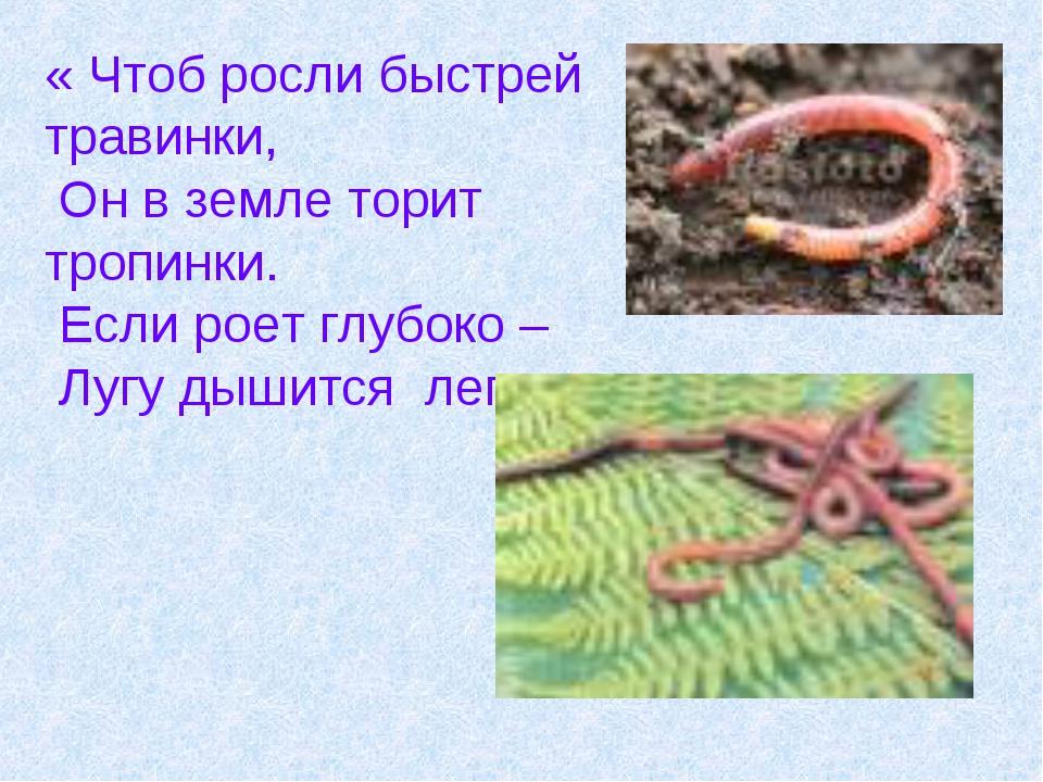 « Чтоб росли быстрей травинки, Он в земле торит тропинки. Если роет глубоко –...