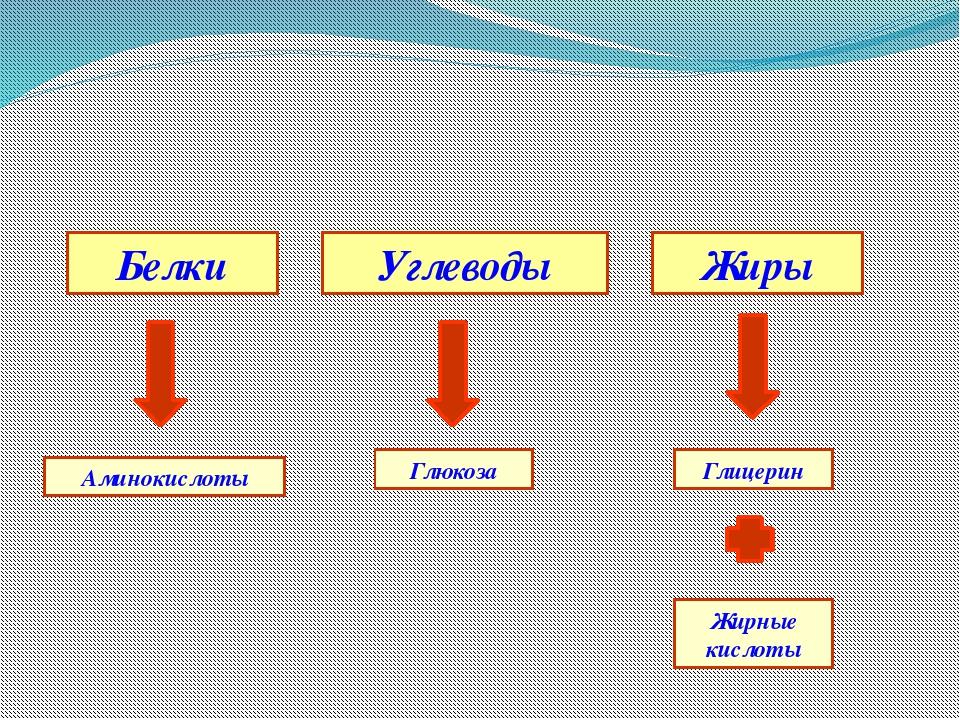 Жиры Углеводы Белки Аминокислоты Глюкоза Глицерин Жирные кислоты