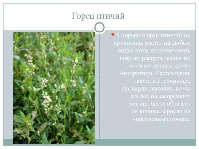 Горец птичий Спорыш (горец птичий) не прихотлив, растёт на любых видах почв,...