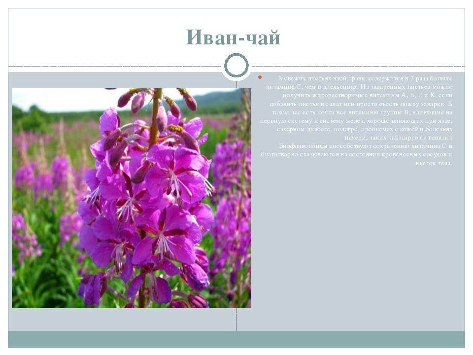 Иван-чай В свежих листьях этой травы содержится в 3 раза больше витамина C, ч...