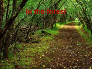 In the forest In the forest