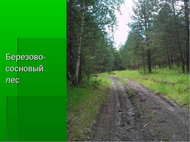 Березово- сосновый лес