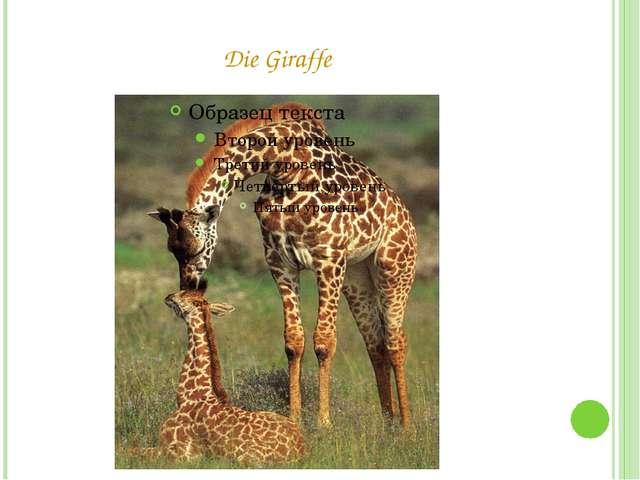 Die Giraffe