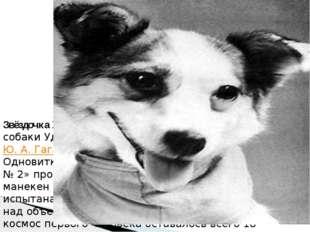 Звёздочка 25 марта 1961 года состоялся полёт собаки Удача, которой первый кос