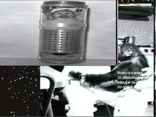 Всего в космос летали 32 обезьяны; у каждой было только по одной миссии.