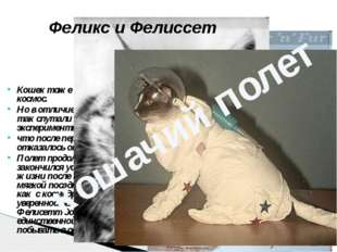 Кошек тоже пробовали отправлять в космос. Но в отличие отпрочих животных,