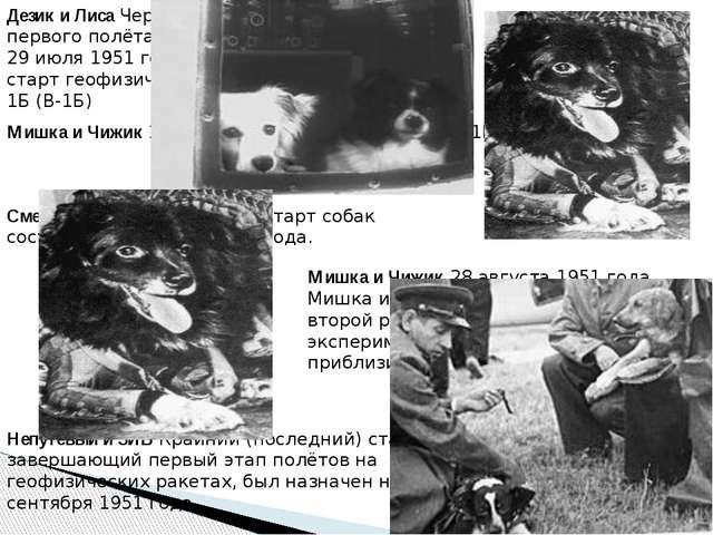 Дезик и Лиса Через неделю после первого полёта собак на ракете 29 июля 1951 г...