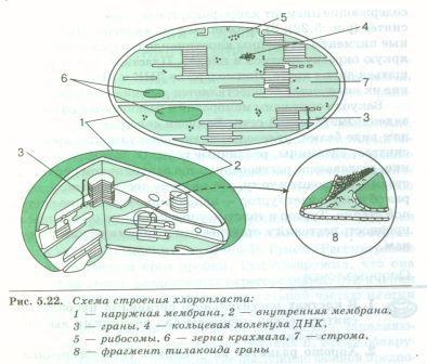 C:\Documents and Settings\Admin\Рабочий стол\Самостоятельная работа уч-ся с учебником\SWScan00080.jpg