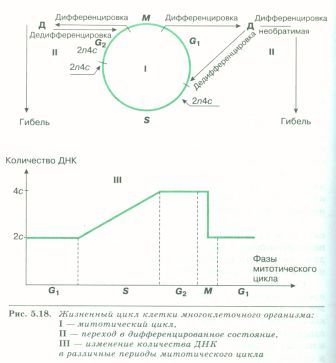 C:\Documents and Settings\Admin\Рабочий стол\Самостоятельная работа уч-ся с учебником\SWScan000791.jpg